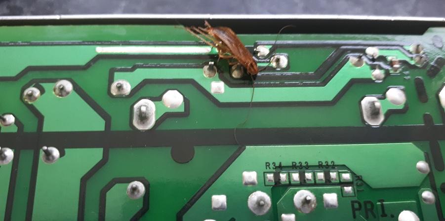 Таракан-камикадзе атакует принтер